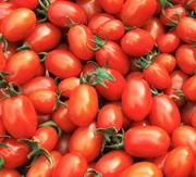 능주면 특산물 방울토마토